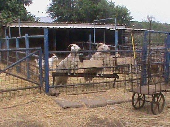 Merom Golan Resort Village: small zoo for children