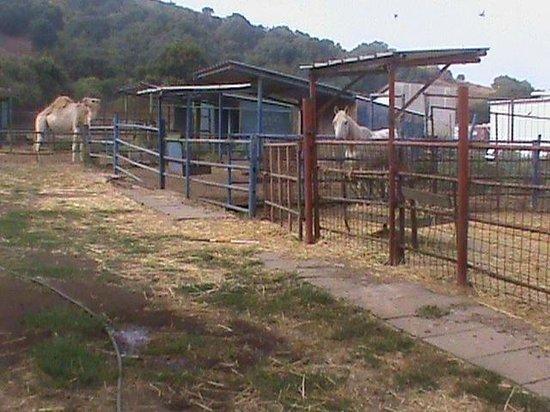 Merom Golan Resort Village: small zoo