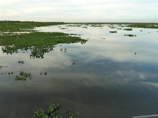 Pousada Piuval: pantanal na pousada