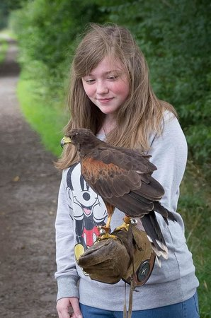 Stockley Farm Birds of Prey Centre: Part of the birds of prey experience