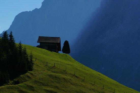 Aspen Alpin Lifestyle Hotel Grindelwald: den Hals nicht voll kriegen!