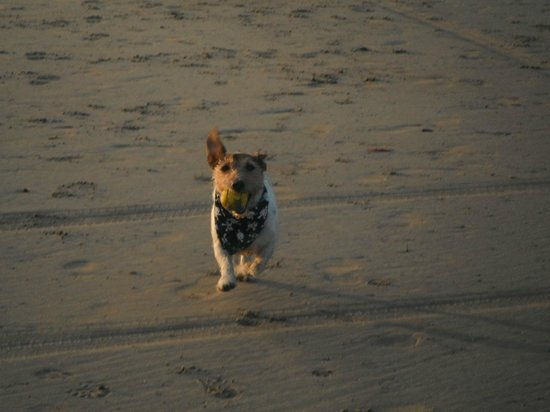 Wheal Rodney Holiday Park : Dog,s welcome on main beach-before 8am-after 7pm