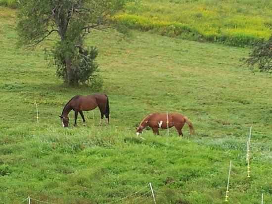 High Hill Inn: mares grazing