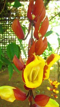 Na Aina Kai Botanical Gardens: Gorgeous flowers abound!