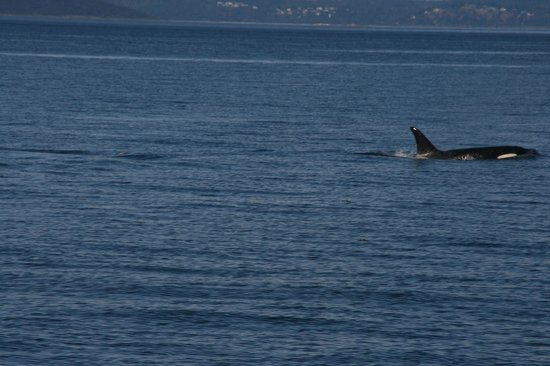 Hotel Bellwether: Outer Island Expedition killer whale watching