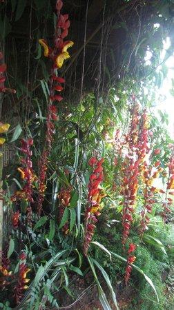 Na Aina Kai Botanical Gardens: A curtain of flowers!