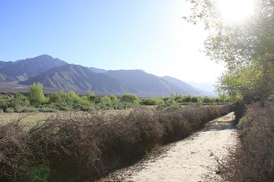 Tsermang Eco Camp: tsermang actually means the spiky bushes that you see plenty around ladakh