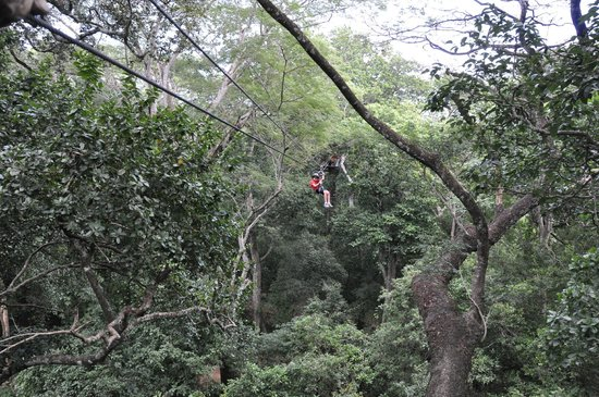 The Congo Trail Canopy Tour: zip line