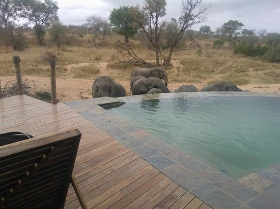 Royal Legend Safari Lodge & Spa: Elephants drinking in front of the Main lodge