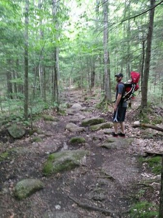 Welch Mountain and Dickey Mountain Loop : Safe enough for a baby with help of a daddy!