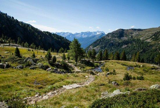 Cogolo di Pejo, Italie : La Val di Pejo, lato Val de la Mare