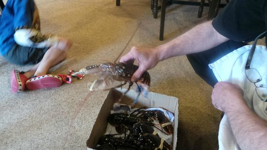 The Harbour Lights B&B: The Lobster is Fresh!