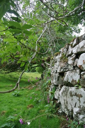 Skye Tours: Fairy Glen Wall