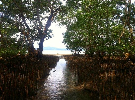 Cakalang Bunaken: Die Mangrovenbäume befinden zwischen Strand und Meer; Zugang zum Boot bei Ebbe durch die Bäume