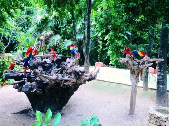 Mayan Gate Tours: Xcaret