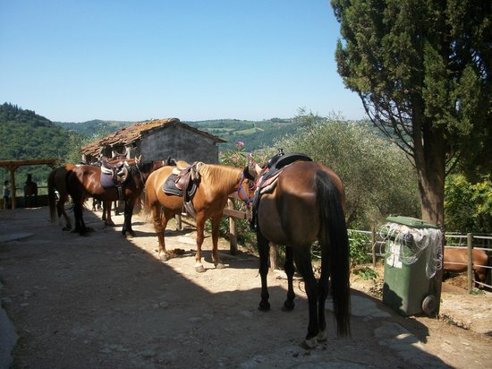 Horses and Vineyards : at the ranch