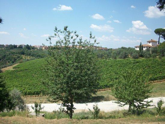 Horses and Vineyards : Tuscany hills
