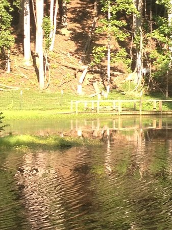 The Roost Bed and Breakfast: Pond (with goats in background)