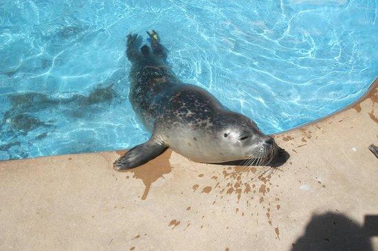Natureland Seal Sanctuary : ... fish - Picture of Natureland Seal Sanctuary, Skegness - TripAdvisor