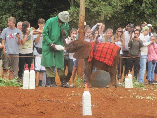 African Heritage House: Sheldrick Elephant Orphanage