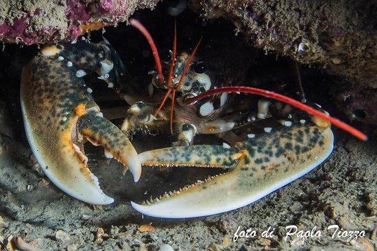 Diving nord Adriatico Jesolo: I nostri gioielli