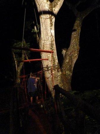 The Treehouse: Drawbridge night run!