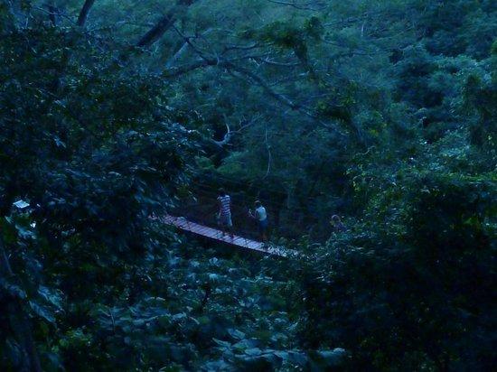 The Treehouse : Draw bridge leading to the yoga deck