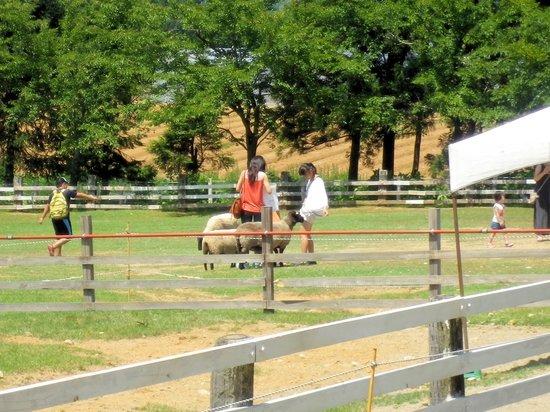 Bokka no Sato: 動物に乗ったり餌を与えたりできる牧場