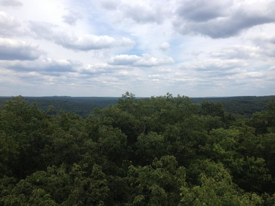 Cook Forest State Park: View from fire tower