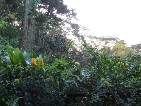 Lost Iguana Resort & Spa: Garden view in front of room