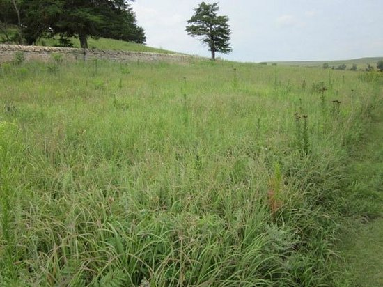 Tallgrass Prairie National Preserve: Tallgrasses