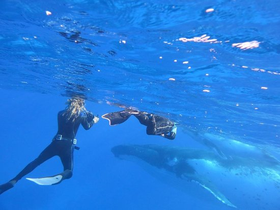 Rurutu, เฟรนช์โปลินีเซีย: Baleines, moniteur et ado.