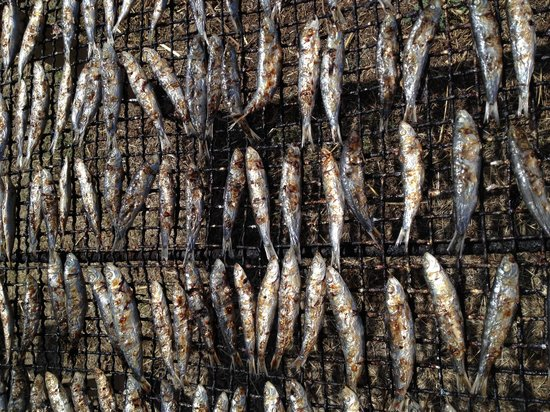 CoquiThau : Sardines grillées