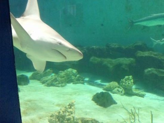 Shark Exhibit Picture Of Mote Marine Laboratory And