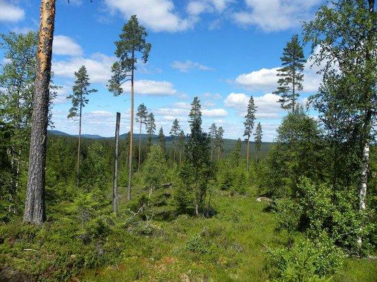Finnskogen Turist & Villmarksenter: Finnskogen's vakre natur.