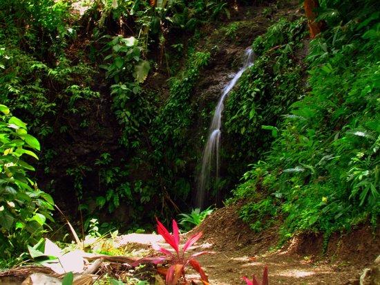 "Las Cascadas The Falls: Las Cascadas - ""The Falls"""