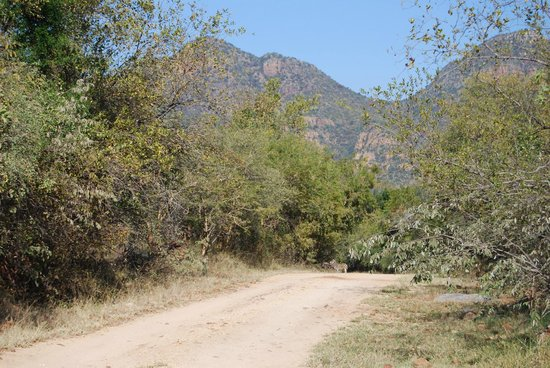 Blyde River Canyon Lodge: Nice view on morning walks