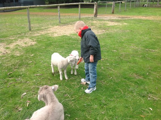 Margaret River Hideaway & Farmstay: feeding the animals