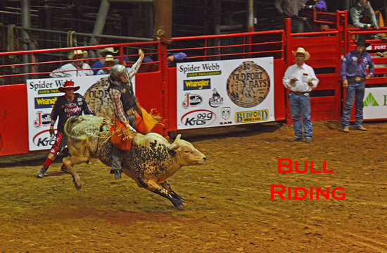 Bull Riding Picture Of Harper Stadium Fort Smith