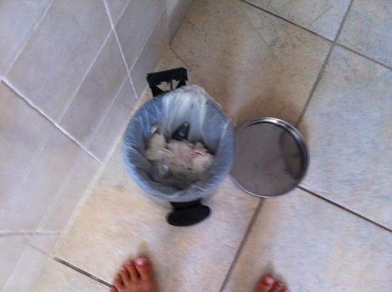Lilium Maris : poubelle cassée
