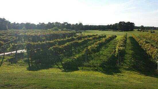 Tuscany House at the Renault Winery Resort: hole 7 over the Renault Vineyard