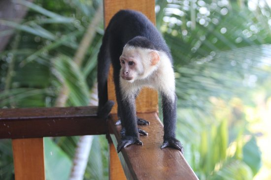 Hotel Costa Verde: This guy came to visit us on our balcony!