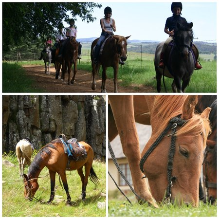 The Old Hatchery: Horse Riding