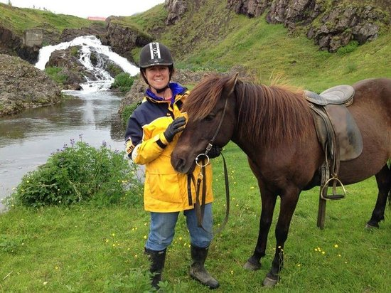Laxnes Horse Farm: Laxnes Icelandic pony