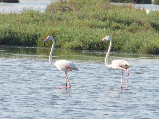Camping Village Marina di Venezia: Fenicotteri rosa a Lio Piccolo