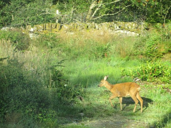 Seafield Farm Cottages: A morning visitor