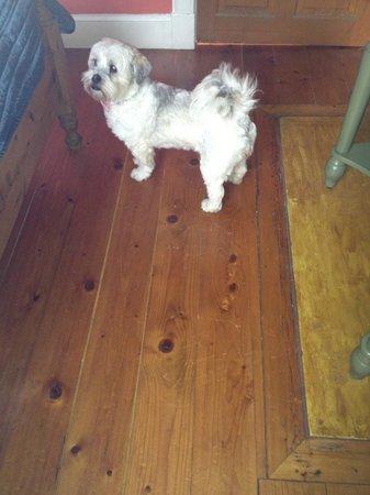 Cluaran Guest House: doggy