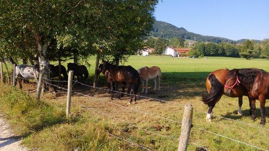 Farbinger Hof: cavalli