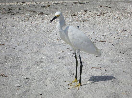 Mitchell's Sandcastles: Friendly Birds