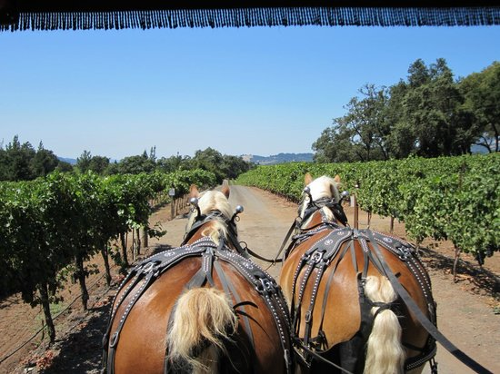 The Wine Carriage: Travel the behind the scene paths